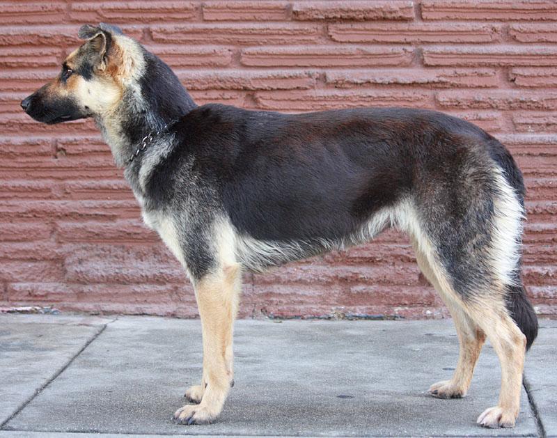 Omaha Non Profit Service Dogs